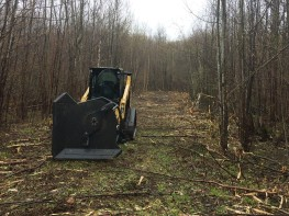 Trail/Road Clearing